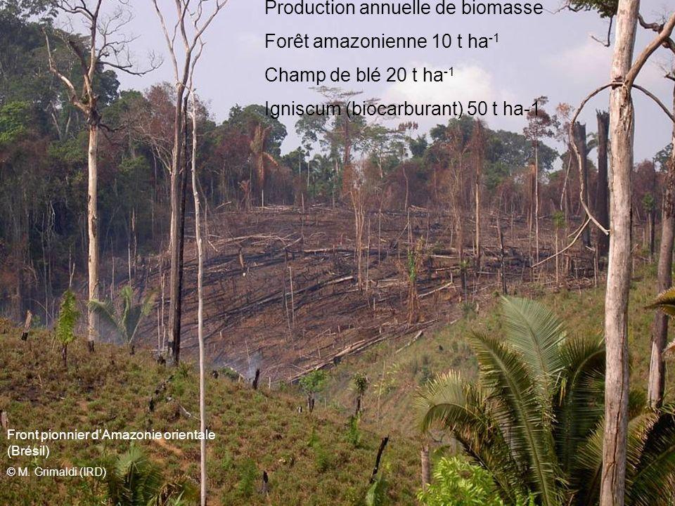 Front pionnier dAmazonie orientale (Brésil) © M. Grimaldi (IRD) Production annuelle de biomasse Forêt amazonienne 10 t ha -1 Champ de blé 20 t ha -1 I