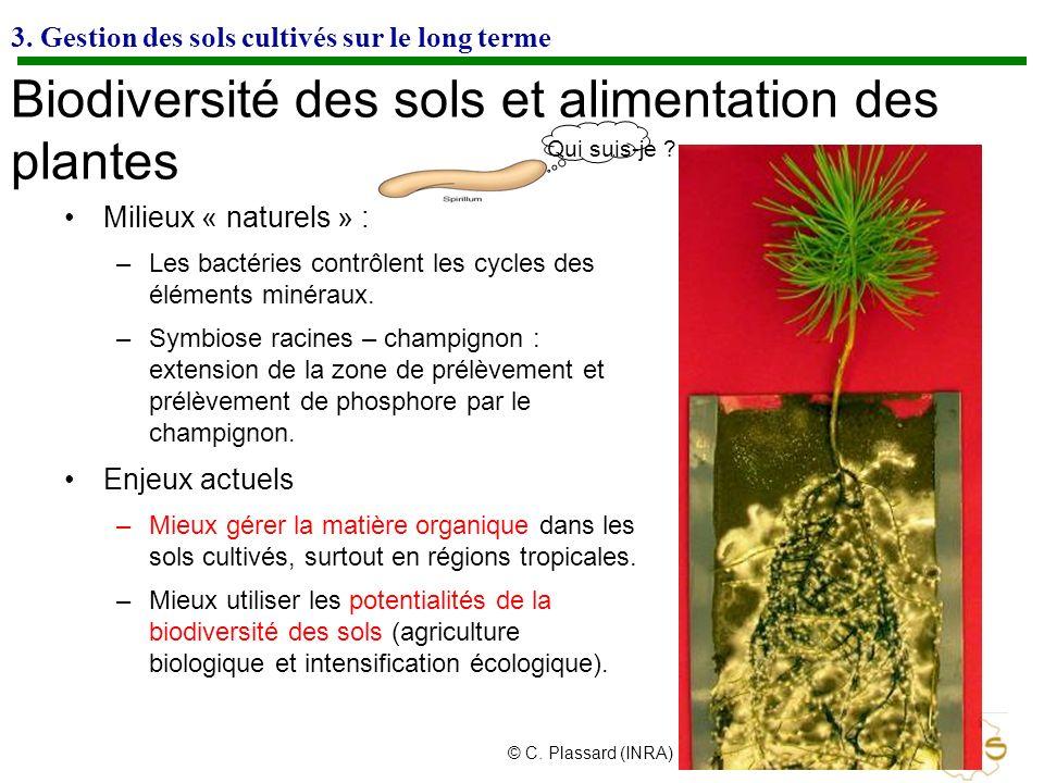 Qui suis-je ? 3. Gestion des sols cultivés sur le long terme Biodiversité des sols et alimentation des plantes Milieux « naturels » : –Les bactéries c