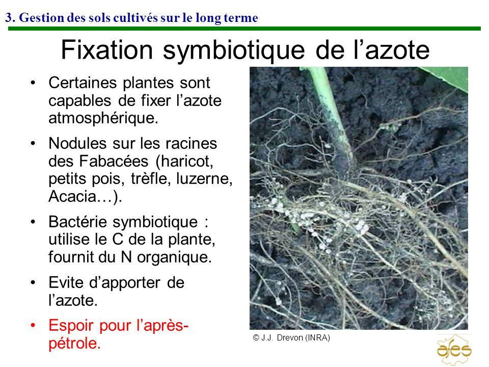 3. Gestion des sols cultivés sur le long terme Fixation symbiotique de lazote Certaines plantes sont capables de fixer lazote atmosphérique. Nodules s
