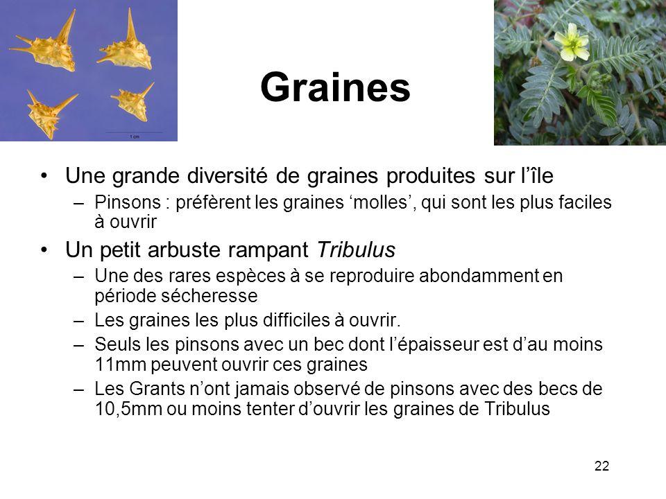 Graines Une grande diversité de graines produites sur lîle –Pinsons : préfèrent les graines molles, qui sont les plus faciles à ouvrir Un petit arbust