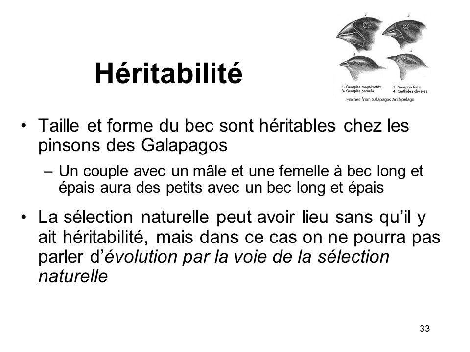 Héritabilité Taille et forme du bec sont héritables chez les pinsons des Galapagos –Un couple avec un mâle et une femelle à bec long et épais aura des