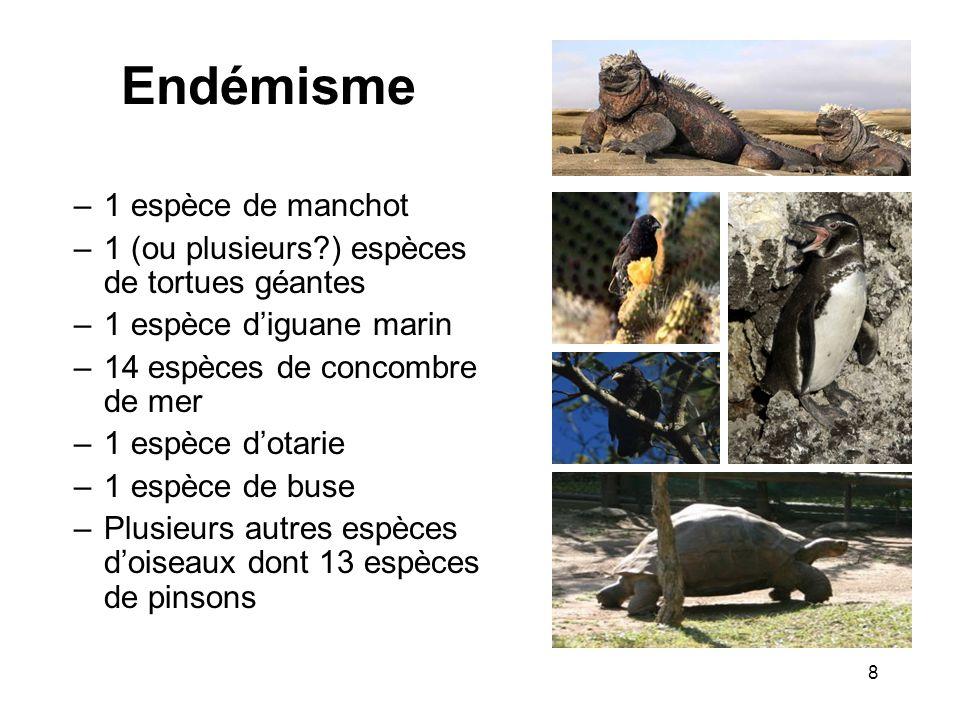 Les Pinsons des Galapagos 13 espèces de pinsons: –6 espèces de pinsons terrestres –3 espèces de pinsons arboricoles –1 pinson pic –1 pinson végétarien –1 pinson de mangrove –1 pinson fauvette qui ressemble plus à une fauvette quà un pinson Le pinson pic : utilise les épines de cactus comme outil pour extraire les larves dont il se nourrit des cactus 9