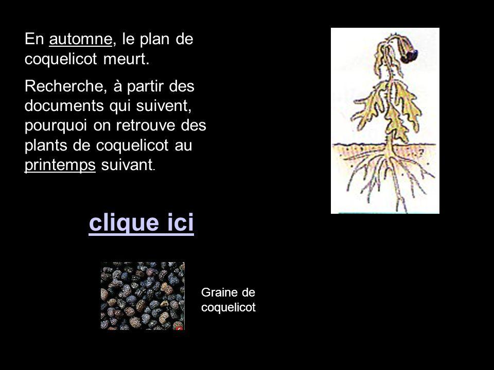 En automne, le plan de coquelicot meurt. Recherche, à partir des documents qui suivent, pourquoi on retrouve des plants de coquelicot au printemps sui