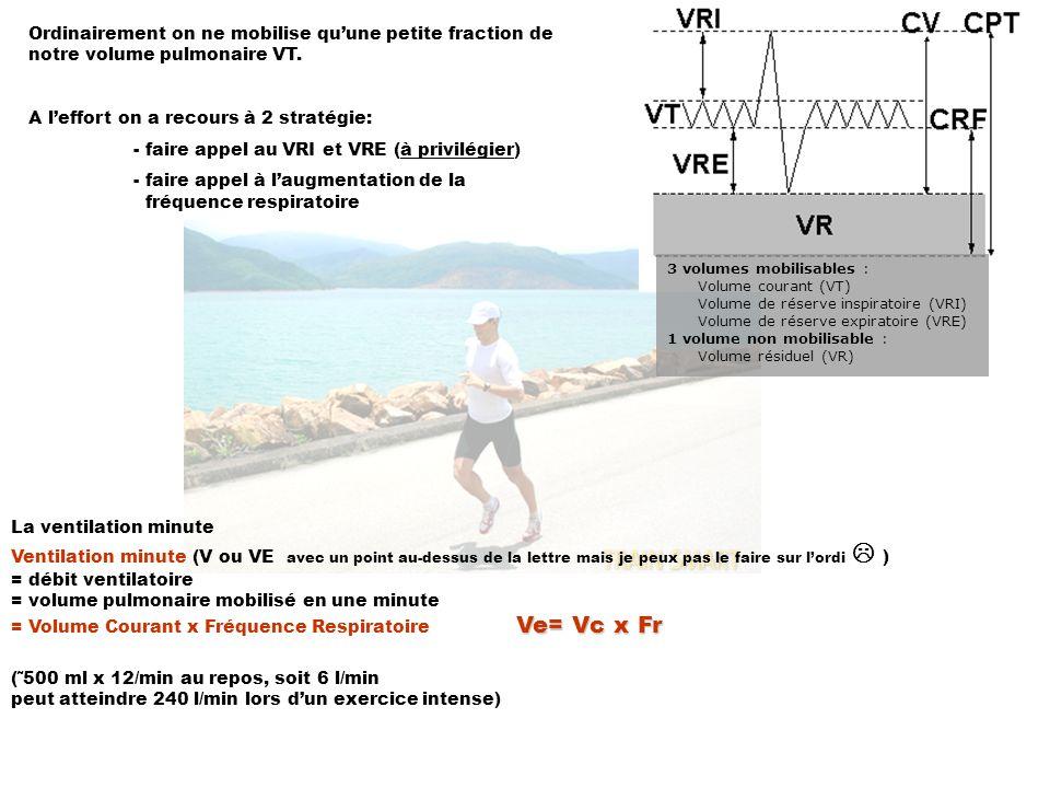 La ventilation minute Ventilation minute (V ou VE avec un point au-dessus de la lettre mais je peux pas le faire sur lordi ) = débit ventilatoire = volume pulmonaire mobilisé en une minute Ve= Vc x Fr = Volume Courant x Fréquence Respiratoire Ve= Vc x Fr (˜500 ml x 12/min au repos, soit 6 l/min peut atteindre 240 l/min lors dun exercice intense) 3 volumes mobilisables : Volume courant (VT) Volume de réserve inspiratoire (VRI) Volume de réserve expiratoire (VRE) 1 volume non mobilisable : Volume résiduel (VR) Ordinairement on ne mobilise quune petite fraction de notre volume pulmonaire VT.