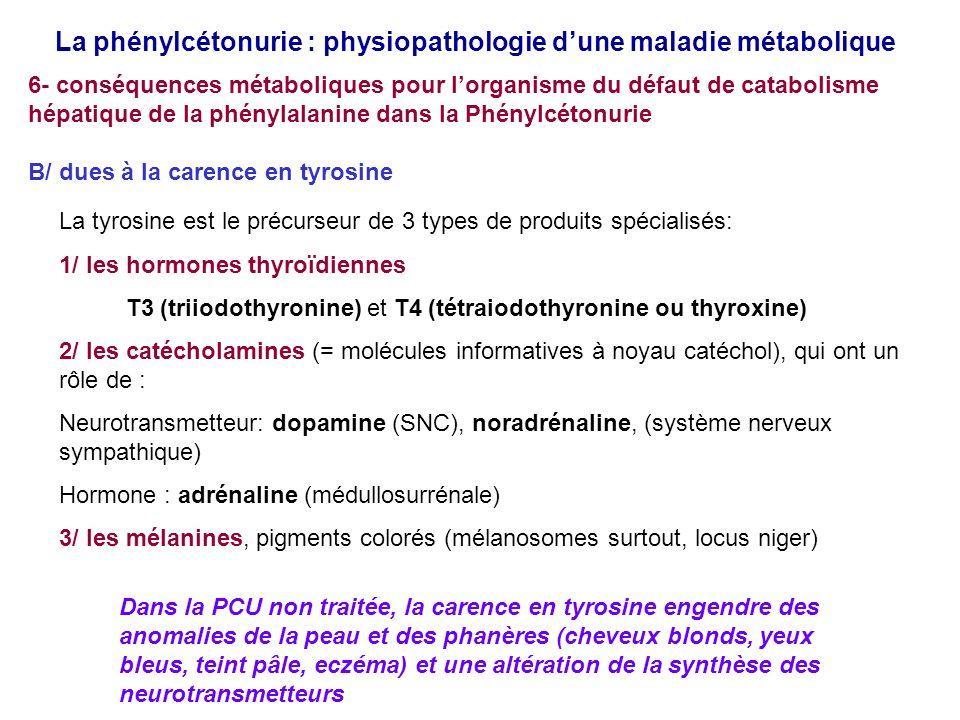 La phénylcétonurie : physiopathologie dune maladie métabolique 6- conséquences métaboliques pour lorganisme du défaut de catabolisme hépatique de la phénylalanine dans la Phénylcétonurie B/ dues à la carence en tyrosine La tyrosine est le précurseur de 3 types de produits spécialisés: 1/ les hormones thyroïdiennes T3 (triiodothyronine) et T4 (tétraiodothyronine ou thyroxine) 2/ les catécholamines (= molécules informatives à noyau catéchol), qui ont un rôle de : Neurotransmetteur: dopamine (SNC), noradrénaline, (système nerveux sympathique) Hormone : adrénaline (médullosurrénale) 3/ les mélanines, pigments colorés (mélanosomes surtout, locus niger) Dans la PCU non traitée, la carence en tyrosine engendre des anomalies de la peau et des phanères (cheveux blonds, yeux bleus, teint pâle, eczéma) et une altération de la synthèse des neurotransmetteurs
