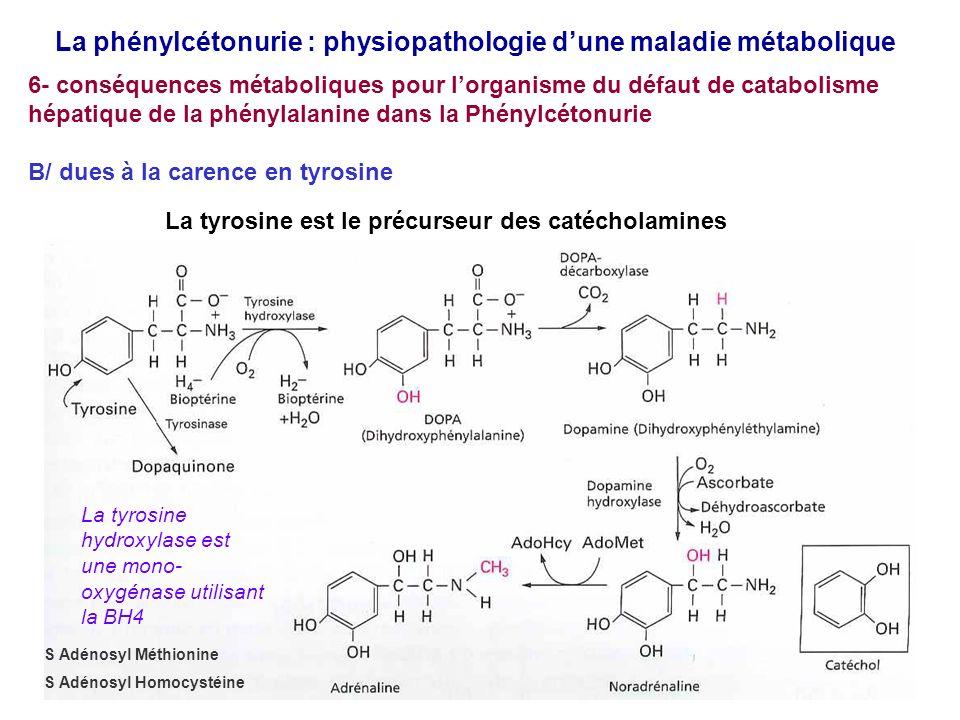 La phénylcétonurie : physiopathologie dune maladie métabolique 6- conséquences métaboliques pour lorganisme du défaut de catabolisme hépatique de la phénylalanine dans la Phénylcétonurie B/ dues à la carence en tyrosine La tyrosine est le précurseur des catécholamines La tyrosine hydroxylase est une mono- oxygénase utilisant la BH4 S Adénosyl Méthionine S Adénosyl Homocystéine