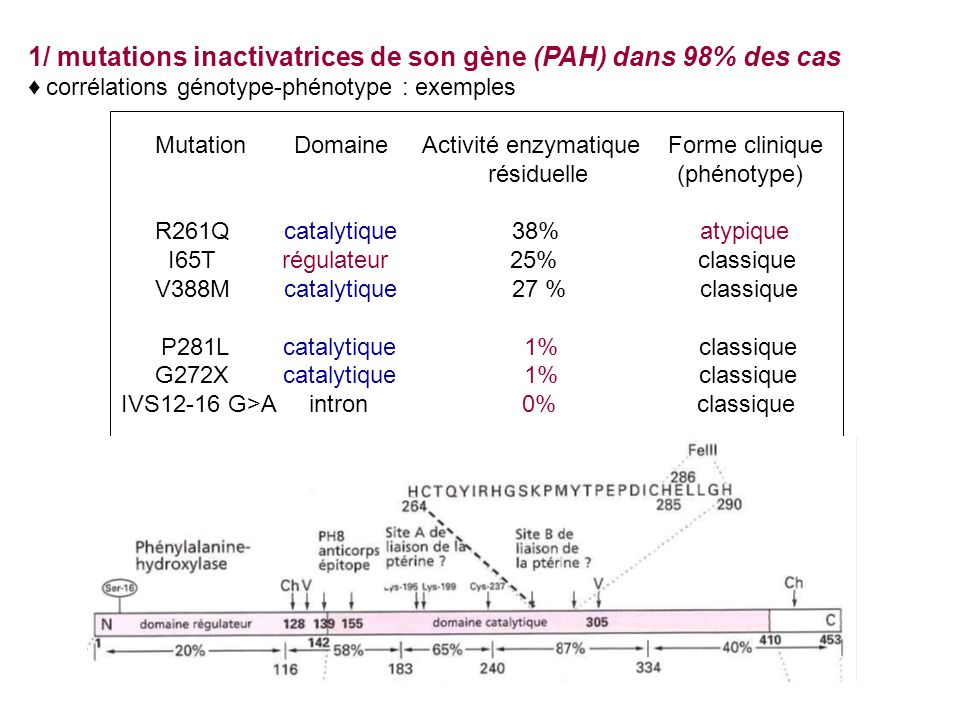1/ mutations inactivatrices de son gène (PAH) dans 98% des cas corrélations génotype-phénotype : exemples Mutation Domaine Activité enzymatique Forme clinique résiduelle (phénotype) R261Q catalytique 38% atypique I65T régulateur 25% classique V388M catalytique 27 % classique P281L catalytique 1% classique G272X catalytique 1% classique IVS12-16 G>A intron 0% classique