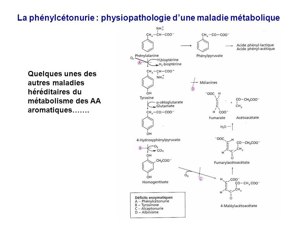 La phénylcétonurie : physiopathologie dune maladie métabolique Quelques unes des autres maladies héréditaires du métabolisme des AA aromatiques…….