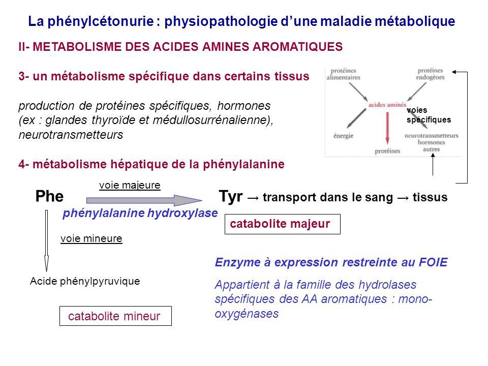La phénylcétonurie : physiopathologie dune maladie métabolique II- METABOLISME DES ACIDES AMINES AROMATIQUES 3- un métabolisme spécifique dans certains tissus production de protéines spécifiques, hormones (ex : glandes thyroïde et médullosurrénalienne), neurotransmetteurs 4- métabolisme hépatique de la phénylalanine Phe Tyr transport dans le sang tissus phénylalanine hydroxylase Acide phénylpyruvique Enzyme à expression restreinte au FOIE Appartient à la famille des hydrolases spécifiques des AA aromatiques : mono- oxygénases catabolite majeur catabolite mineur voie majeure voie mineure voies spécifiques