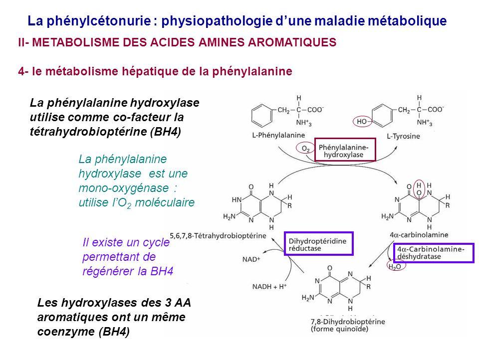 La phénylcétonurie : physiopathologie dune maladie métabolique II- METABOLISME DES ACIDES AMINES AROMATIQUES 4- le métabolisme hépatique de la phénylalanine La phénylalanine hydroxylase utilise comme co-facteur la tétrahydrobioptérine (BH4) La phénylalanine hydroxylase est une mono-oxygénase : utilise lO 2 moléculaire Les hydroxylases des 3 AA aromatiques ont un même coenzyme (BH4) Il existe un cycle permettant de régénérer la BH4