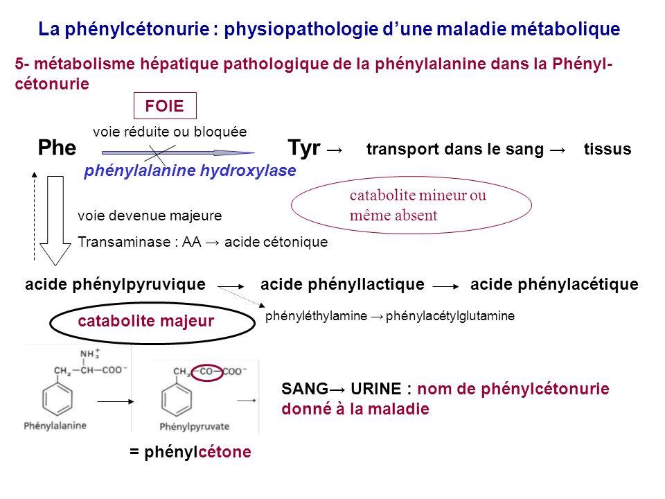 La phénylcétonurie : physiopathologie dune maladie métabolique 6- conséquences métaboliques pour lorganisme du défaut de catabolisme hépatique de la phénylalanine dans la Phénylcétonurie Phe Tyr transport dans le sang tissus phénylalanine hydroxylase acide phénylpyruvique acide phényllactique acide phénylacétique FOIE augmentation de Phe, cest lhyperphénylalaninémie présence de lacide phénylpyruvique et de ses catabolites diminution voire même absence de biosynthèse endogène de Tyr : Tyr devient un AA indispensable (apport par lalimentation devenu indispensable) SANG barrière hématoencéphalique Phe, ac phénylpyruvique cerveau Effets toxiques Carence en tyrosine