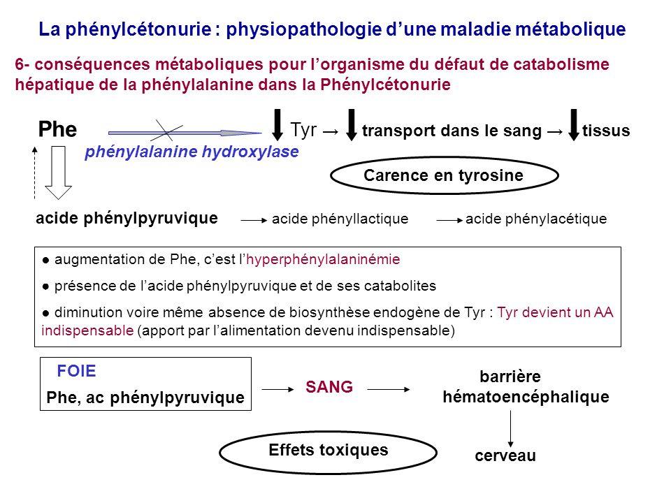 La phénylcétonurie : physiopathologie dune maladie métabolique 6- conséquences métaboliques pour lorganisme du défaut de catabolisme hépatique de la phénylalanine dans la Phénylcétonurie A/ dues à lhyperphénylalaninémie : toxicité cérébrale FOIE SANG Barrière hémato- encéphalique Phe, ac phénylpyruvique, catabolites Cerveau Effets toxiques toxicité indirecte : compétition au niveau du transport des AA neutres transporteur LAT1 des AA neutres Val, Leu, Ile, Thr, His, Trp réduction des biosynthèses de protéines intracérébrales 1 toxicité directe 1 2 2 anomalies de synthèse de la myéline