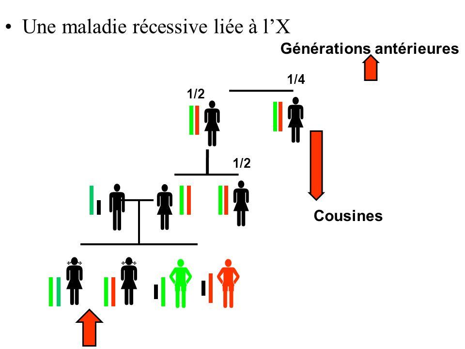 Une maladie récessive liée à lX Générations antérieures 1/2 1/4 1/2 Cousines