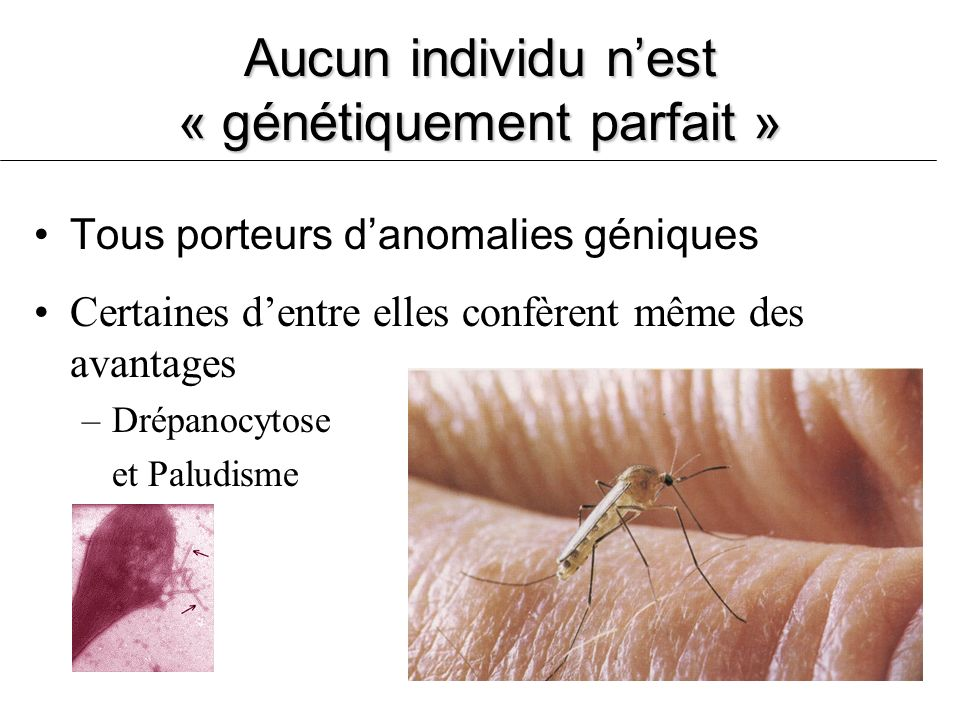 Aucun individu nest « génétiquement parfait » Tous porteurs danomalies géniques Certaines dentre elles confèrent même des avantages –Drépanocytose et