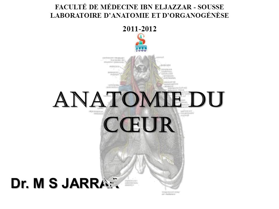 FACULTÉ DE MÉDECINE IBN ELJAZZAR - SOUSSE LABORATOIRE DANATOMIE ET DORGANOGÉNÈSE 2011-2012 Dr.