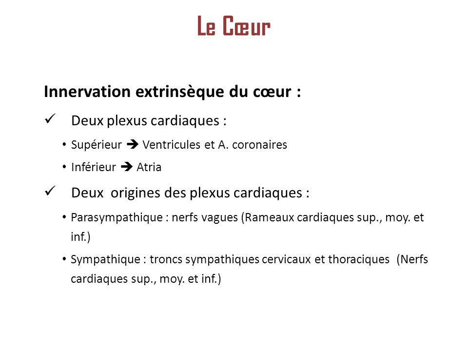 Innervation extrinsèque du cœur : Deux plexus cardiaques : Supérieur Ventricules et A.