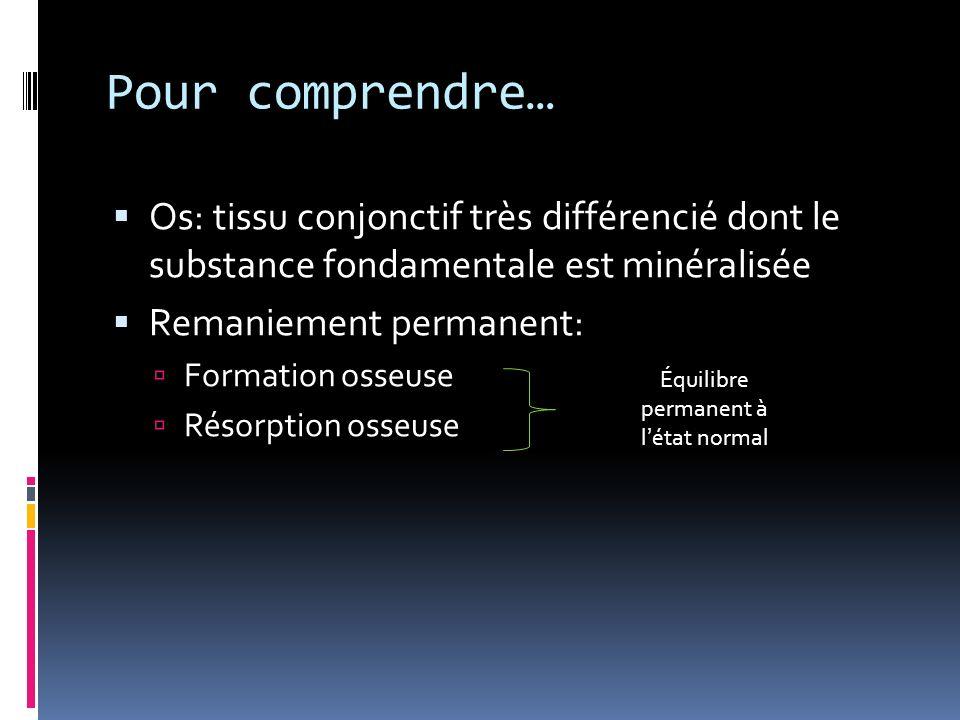 Pour comprendre… Os: tissu conjonctif très différencié dont le substance fondamentale est minéralisée Remaniement permanent: Formation osseuse Résorption osseuse Équilibre permanent à létat normal
