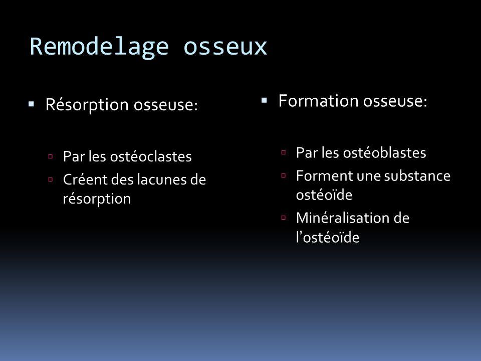 Remodelage osseux Formation osseuse: Par les ostéoblastes Forment une substance ostéoïde Minéralisation de lostéoïde Résorption osseuse: Par les ostéoclastes Créent des lacunes de résorption