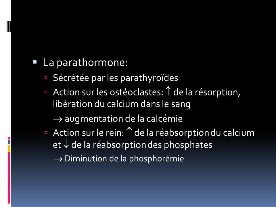 La parathormone: Sécrétée par les parathyroïdes Action sur les ostéoclastes: de la résorption, libération du calcium dans le sang augmentation de la calcémie Action sur le rein: de la réabsorption du calcium et de la réabsorption des phosphates Diminution de la phosphorémie