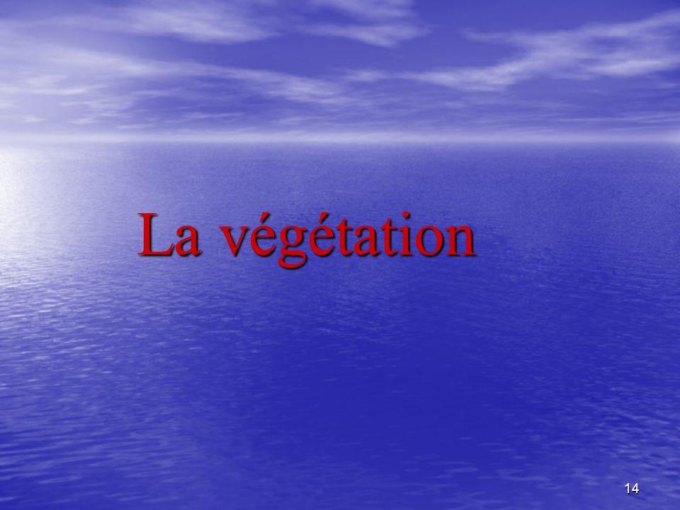 14 La végétation