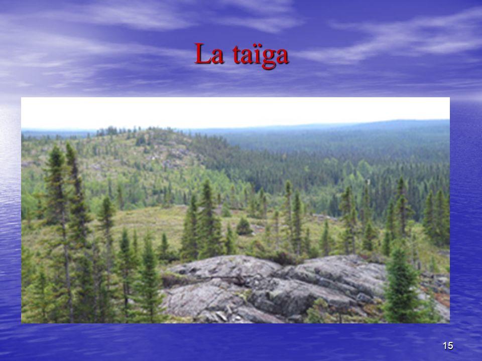 15 La taïga