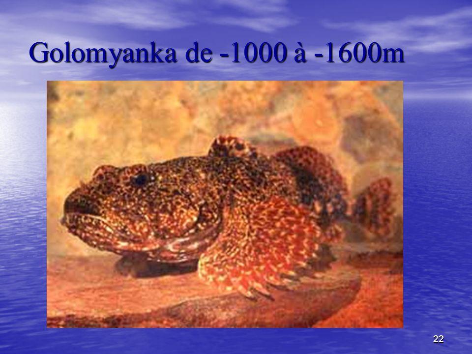 22 Golomyanka de -1000 à -1600m