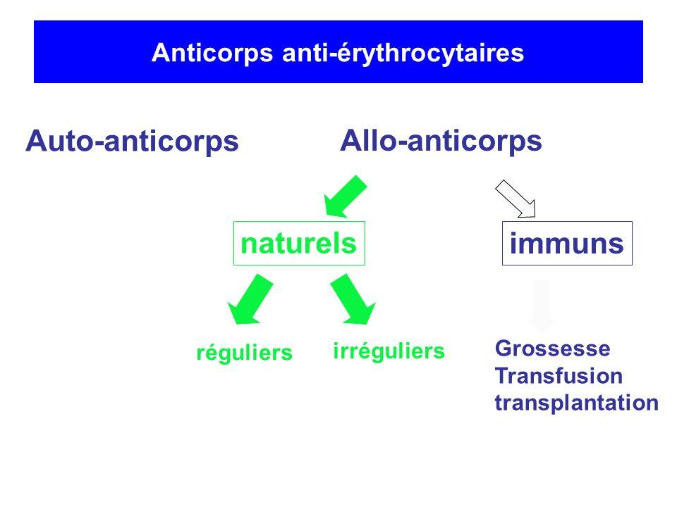 Anticorps anti-érythrocytaire Auto-anticorps Allo-anticorps naturels réguliers irréguliers Grossesse Transfusion transplantation immuns Epreuve plasmatique Groupe ABO RAI