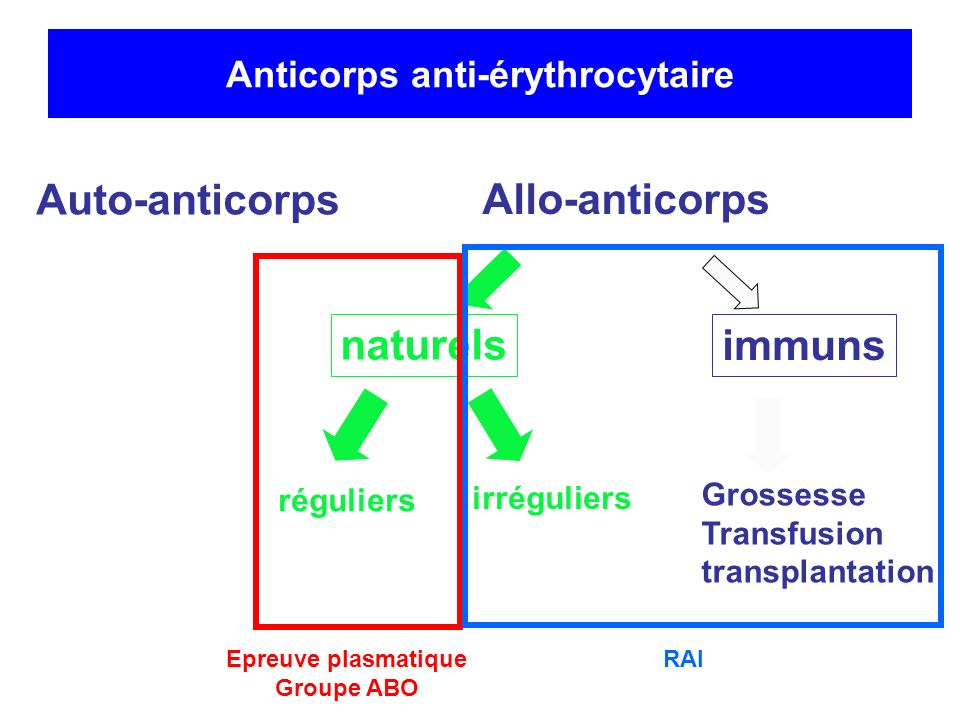 Anticorps anti-érythrocytaire Auto-anticorps Allo-anticorps naturels réguliers irréguliers Grossesse Transfusion transplantation immuns Epreuve plasma