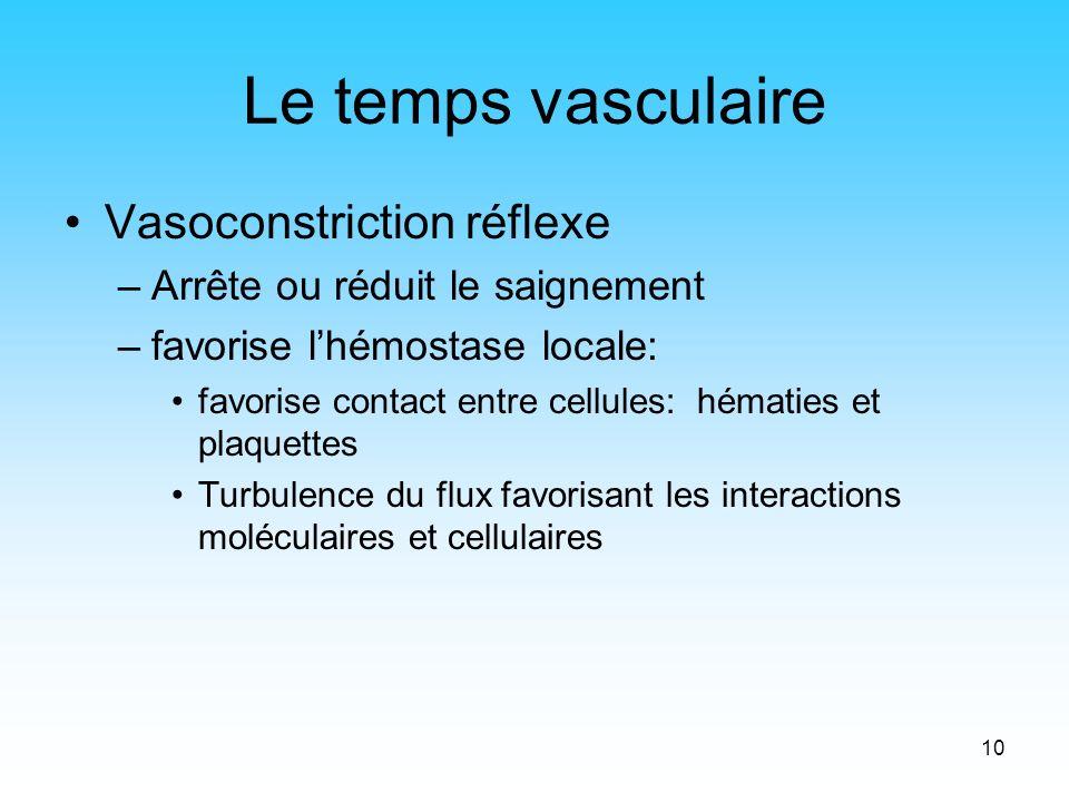 10 Le temps vasculaire Vasoconstriction réflexe –Arrête ou réduit le saignement –favorise lhémostase locale: favorise contact entre cellules: hématies