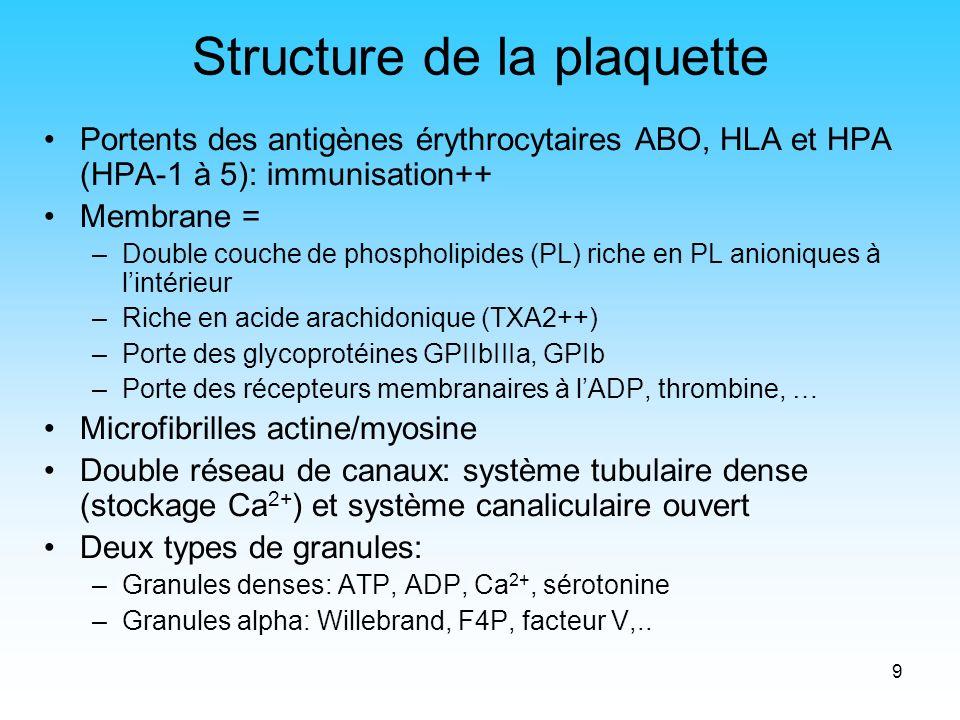 9 Structure de la plaquette Portents des antigènes érythrocytaires ABO, HLA et HPA (HPA-1 à 5): immunisation++ Membrane = –Double couche de phospholip