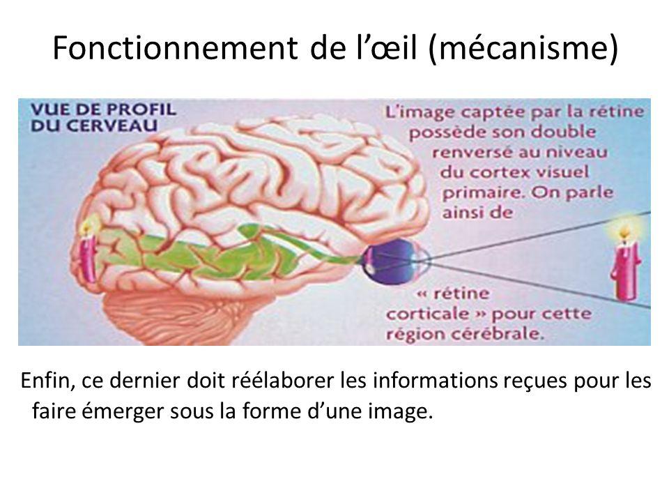 Ensuite le système nerveux (rétine, voies visuelles et cerveau) doit transmettre fidèlement cette image depuis lœil jusquau cerveau. Fonctionnement de