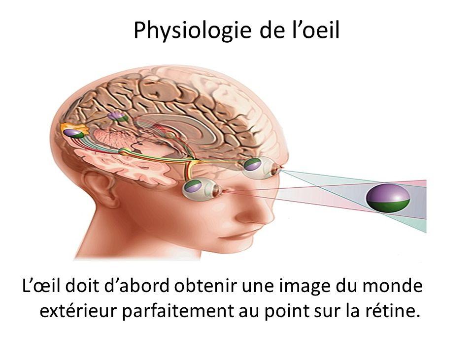 Cortex visuel
