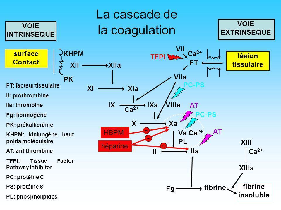 4 Tissue Factor Pathway Inhibitor (TFPI) Inhibiteur de sérine protéase de type Kunitz Il est linhibiteur du facteur tissulaire (FT) au sein du complexe TFPI-FT-FVIIa-FXa Est donc un régulateur de linitiation de la coagulation Egalement inhibiteur de la prolifération et la migration cellulaire Rôle plutôt protecteur dans lathérosclérose Pas de rôle clair en thrombose veineuse Pas de déficit constitutionnel connu >> ne fait donc pas partie du bilan de thrombophilie