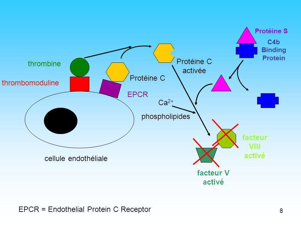 9 L endothélium Est physiologiquement « anticoagulant » Riche en glycoaminoglycannes (GAG): AT et TFPI Thrombomoduline et EPCR (Endothelial Protein C Receptor): activation PC PC EPCR GAGGAG TFPI IIa Xa TF Xa VIIa Adaptation daprès Roberts, Anesthesiology, 2004