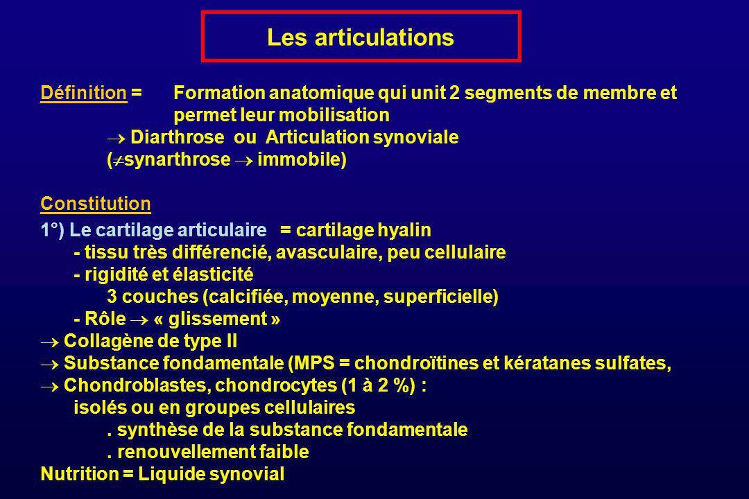Les articulations Définition = Formation anatomique qui unit 2 segments de membre et permet leur mobilisation Diarthrose ou Articulation synoviale ( s