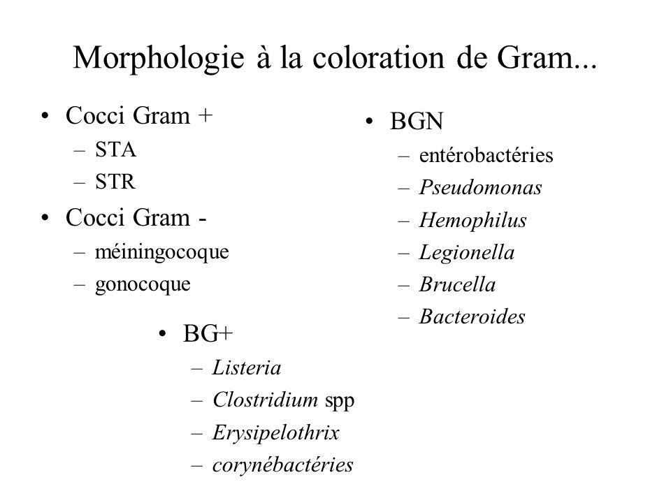 Morphologie à la coloration de Gram... Cocci Gram + –STA –STR Cocci Gram - –méiningocoque –gonocoque BGN –entérobactéries –Pseudomonas –Hemophilus –Le