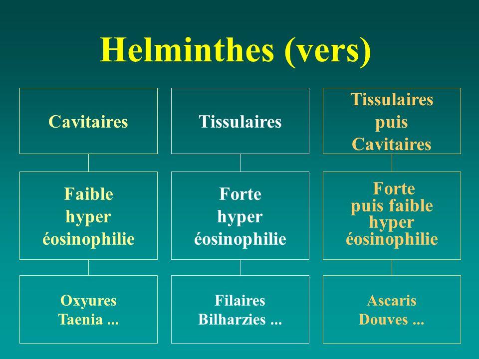 Helminthes (vers) Tissulaires Forte hyper éosinophilie Filaires Bilharzies... Cavitaires Faible hyper éosinophilie Oxyures Taenia... Tissulaires puis