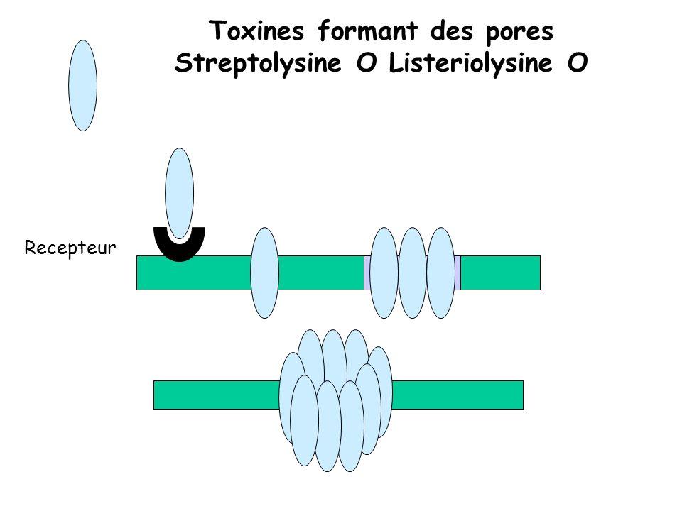 Toxines formant des pores Streptolysine O Listeriolysine O Recepteur