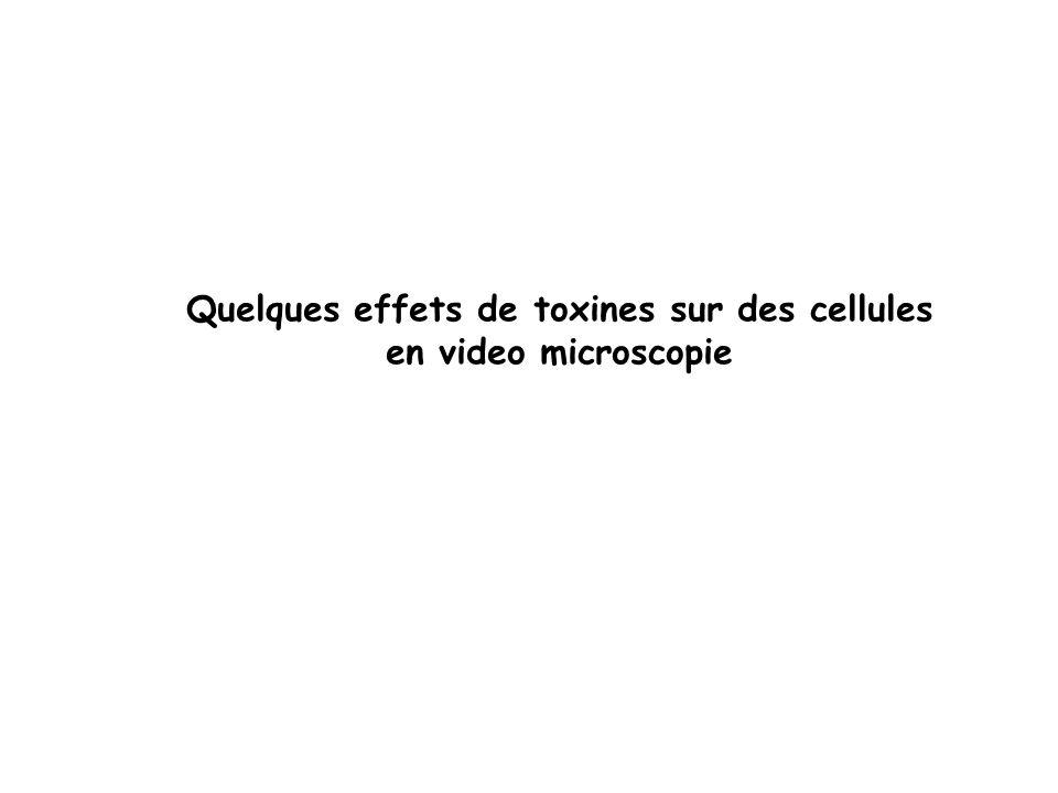 Quelques effets de toxines sur des cellules en video microscopie