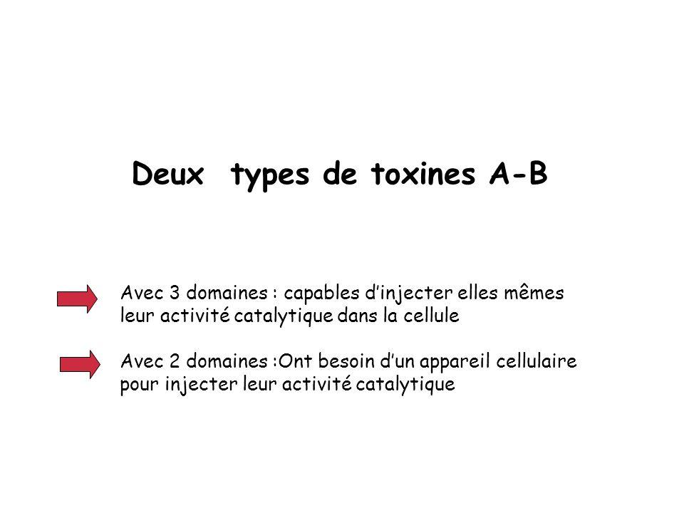 Deux types de toxines A-B Avec 3 domaines : capables dinjecter elles mêmes leur activité catalytique dans la cellule Avec 2 domaines :Ont besoin dun a