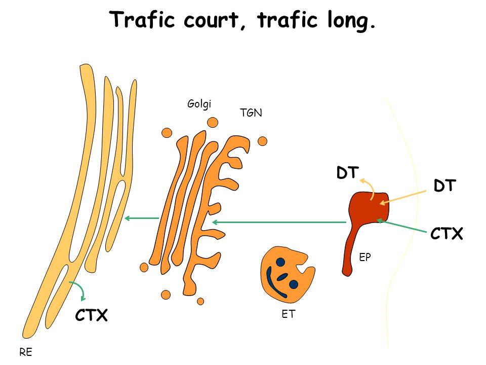 Trafic court, trafic long. RE EP Golgi TGN ET DT CTX
