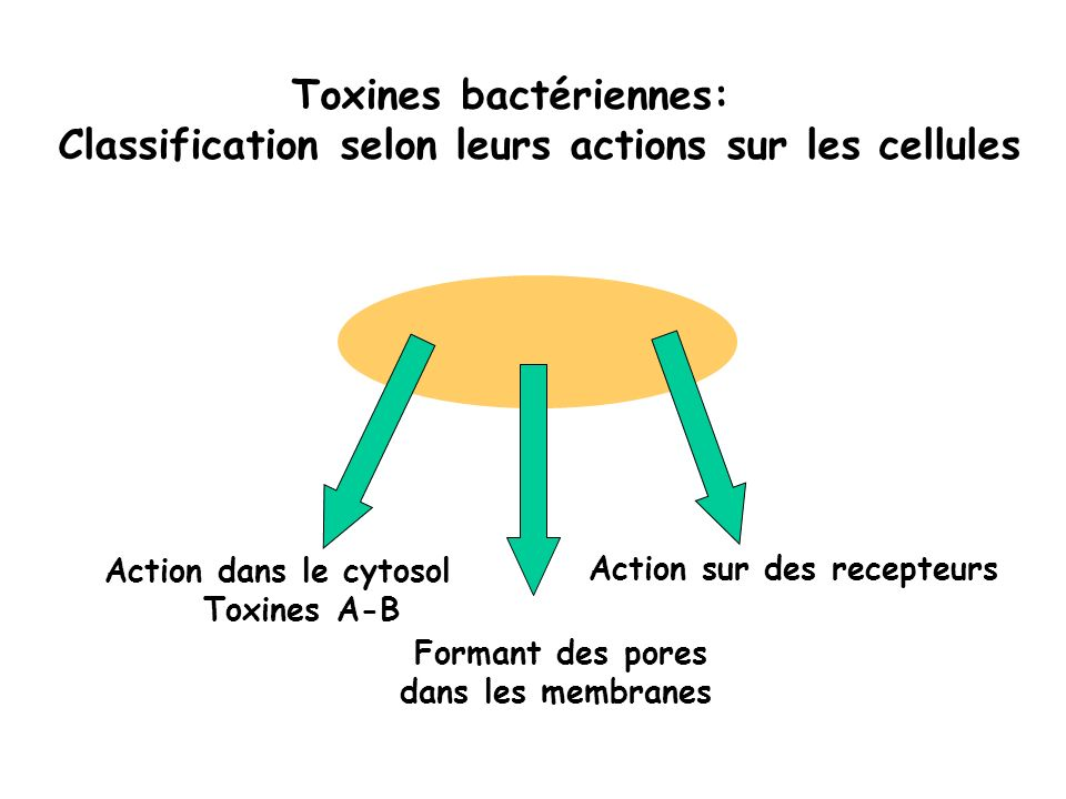 Cibles intracellulaires des toxines A-B 1/ Proteines fixant le GTP Large 100 kD: EF2 DT Hétérotrimeriques Gs CT, LT Gi PTX Petites GTPases Rho exo C3 Rho, Rac Cdc42 Tox A, B, CNF1, CNF2, DNT Ras, Rac, Ral C.