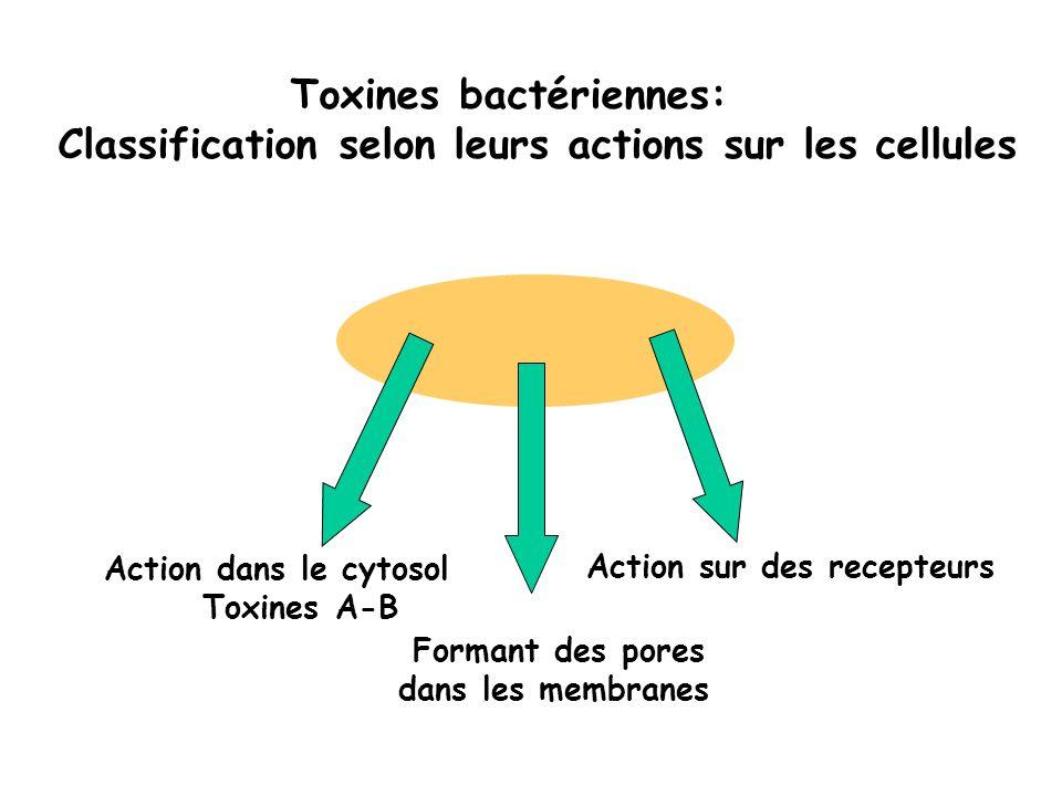 Toxines bactériennes: Classification selon leurs actions sur les cellules Formant des pores dans les membranes Action sur des recepteurs Action dans l