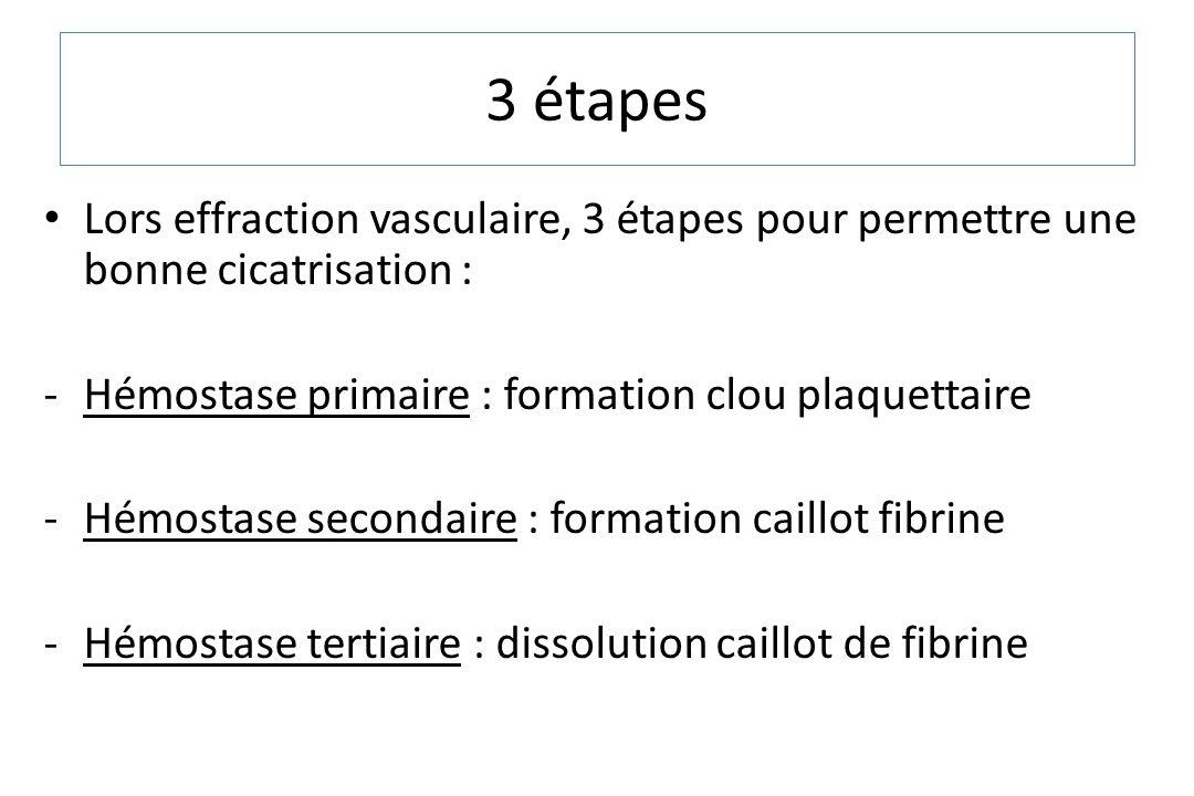 3 étapes Lors effraction vasculaire, 3 étapes pour permettre une bonne cicatrisation : -Hémostase primaire : formation clou plaquettaire -Hémostase se