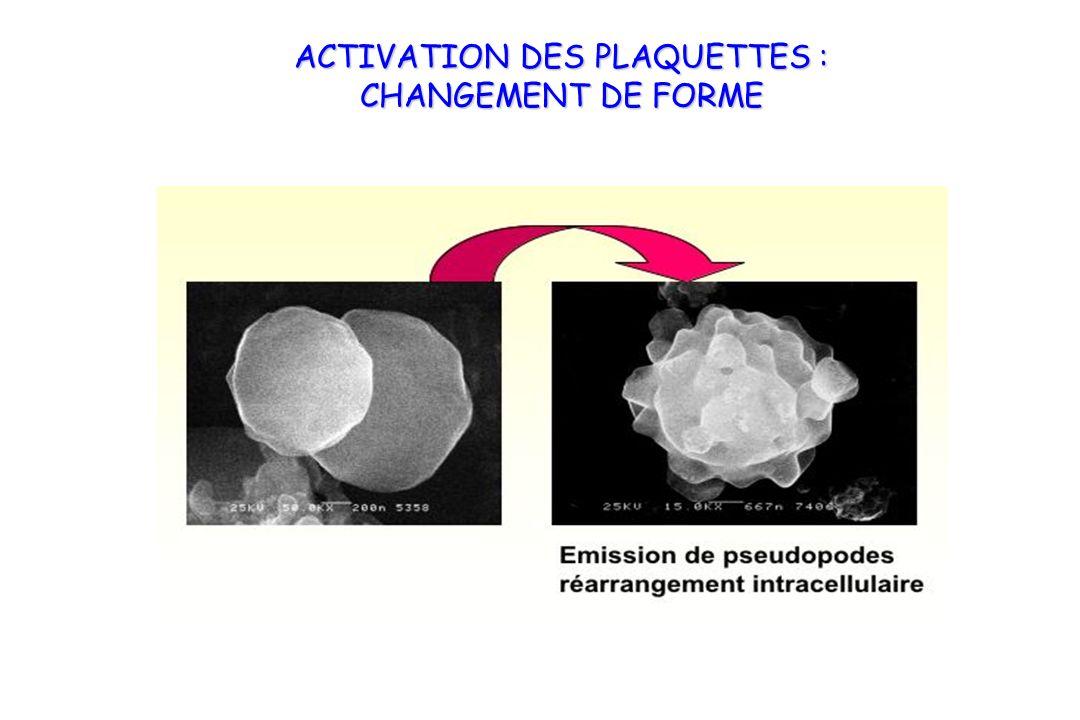 ACTIVATION DES PLAQUETTES : CHANGEMENT DE FORME