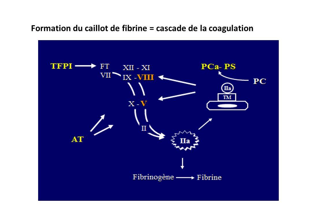 Formation du caillot de fibrine = cascade de la coagulation