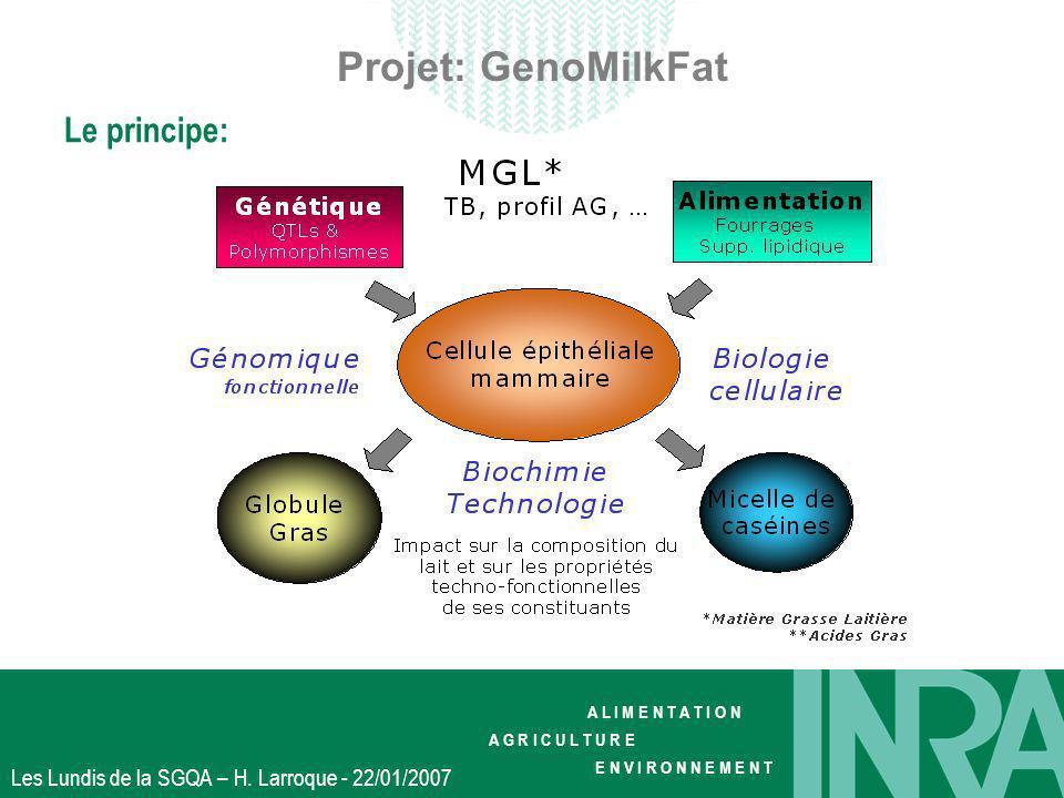 A L I M E N T A T I O N A G R I C U L T U R E E N V I R O N N E M E N T Les Lundis de la SGQA – H. Larroque - 22/01/2007 Projet: GenoMilkFat Le princi