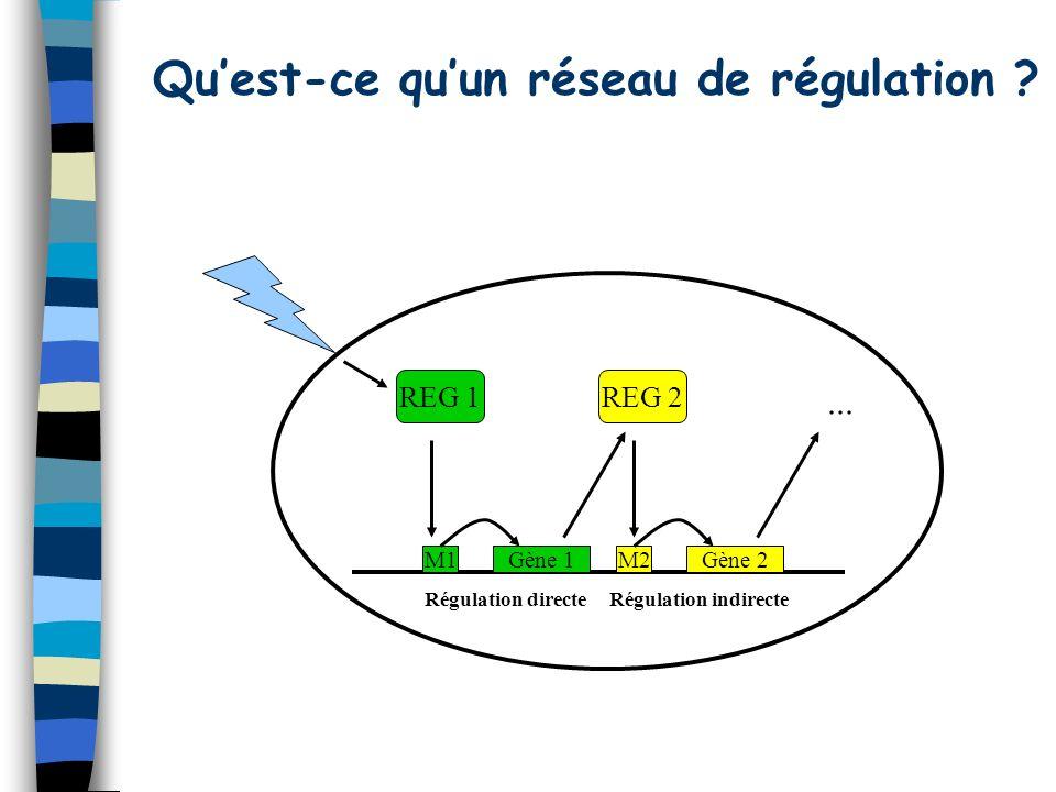 Quest-ce quun réseau de régulation .
