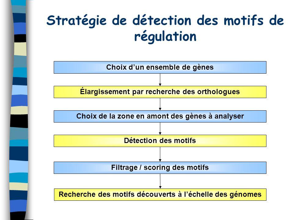 Stratégie de détection des motifs de régulation Choix dun ensemble de gènes Élargissement par recherche des orthologues Choix de la zone en amont des gènes à analyser Détection des motifs Filtrage / scoring des motifs Recherche des motifs découverts à léchelle des génomes