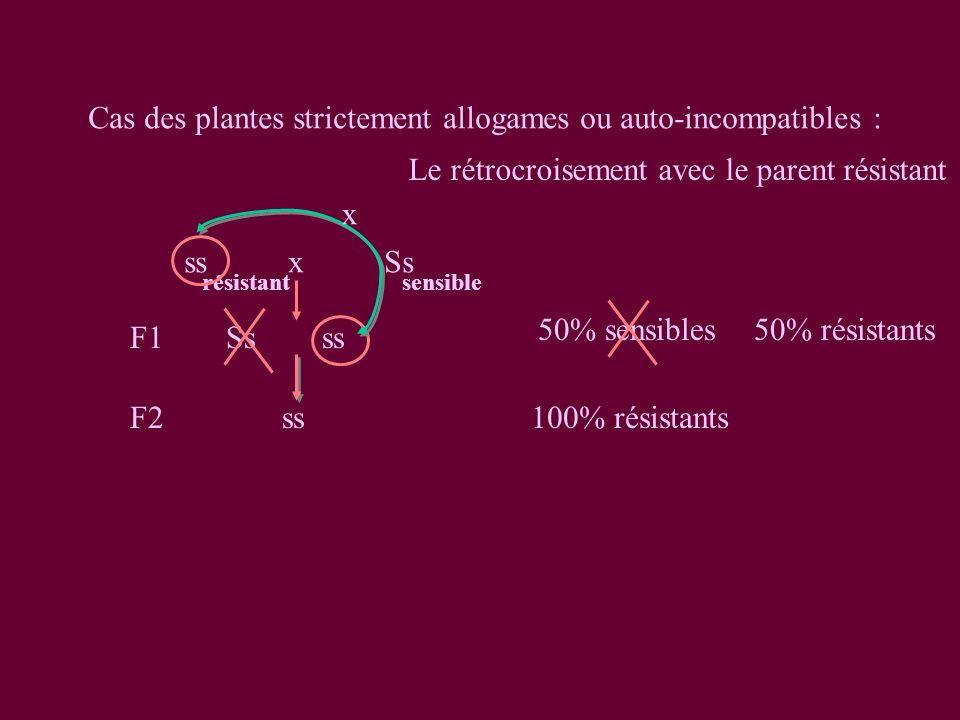 Cas des plantes strictement allogames ou auto-incompatibles : ssxSs F1Ssss 50% sensibles 50% résistants résistantsensible F2 ss100% résistants x Le rétrocroisement avec le parent résistant